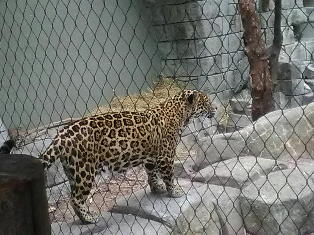 Jaguar 4 by KonekoWaneko