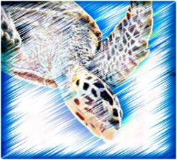 Turtle by tiggerpuss