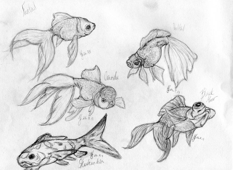 goldfish sketchdump i by galabraeburn