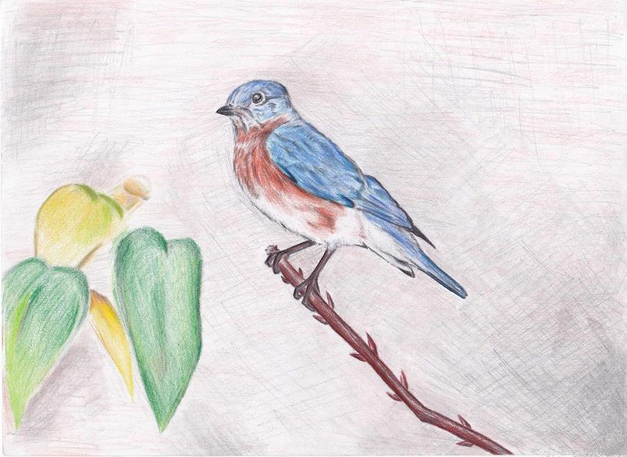 Eastern Blue Bird by chrisss3