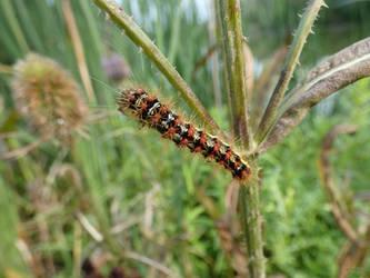 Fuzzy 'lil Caterpillar by SirWongIII