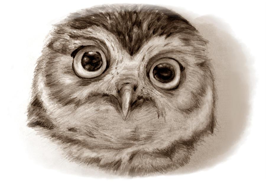 Owl by Alena-Koshkar