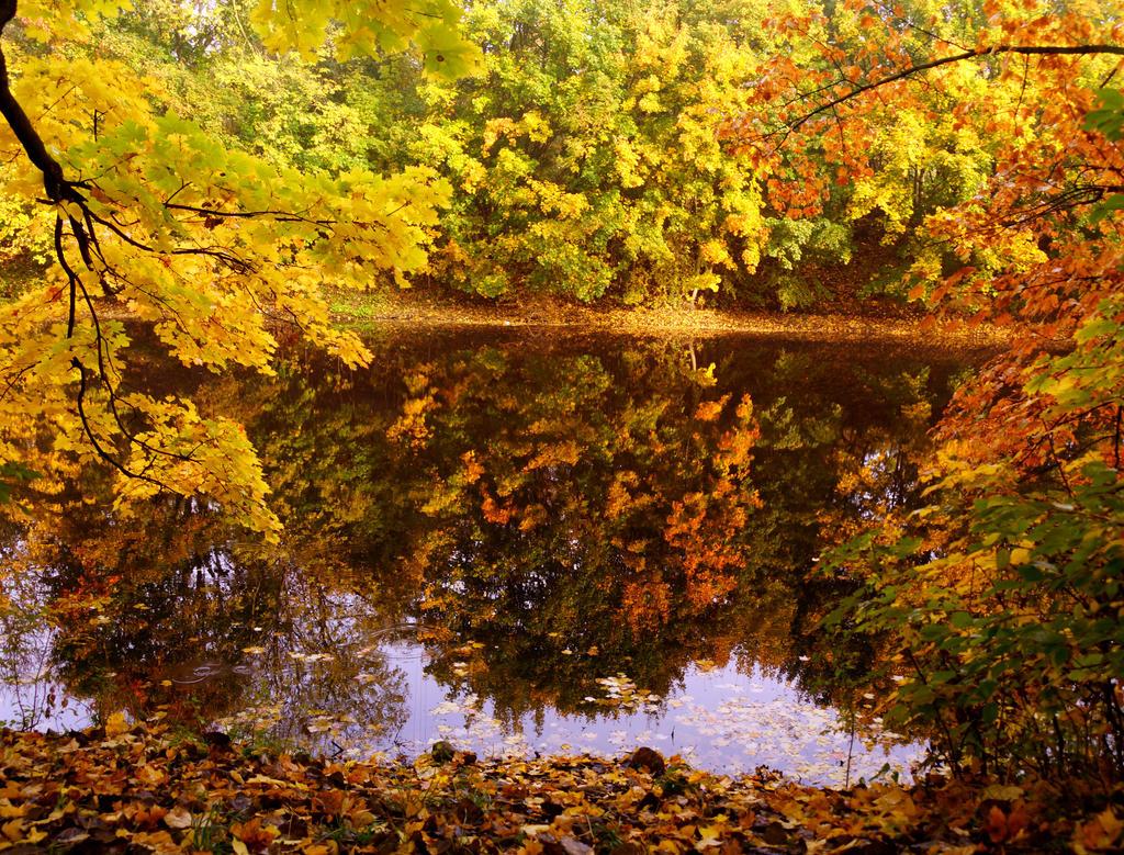 Autumn by Alena-Koshkar