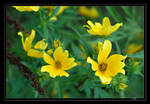 Yellow and Green by InLightImagery