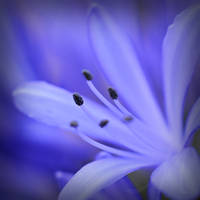 Moody Blues by InLightImagery