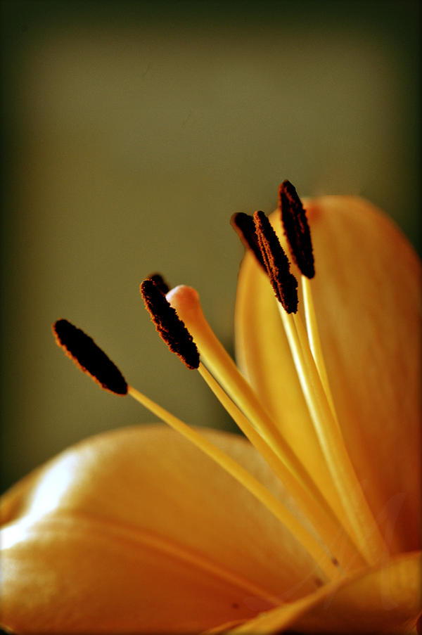 Orange - Page 2 Lily_bright_by_masterwks-d34cty6
