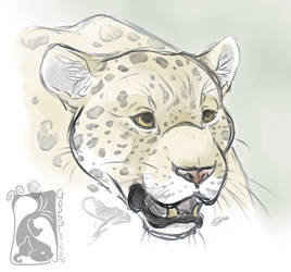 -Warm Up- Jaguar