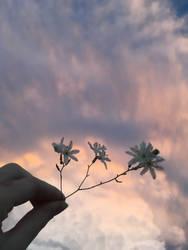 Daydream by broken-light-bulbs
