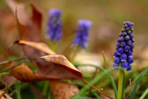 Finally Spring STOCK by dsnider