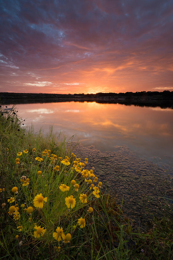 Brushy Creek Blooms by dsnider