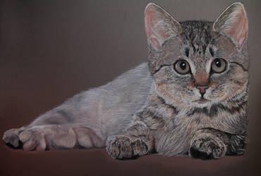 Tabby Cat by Auwris