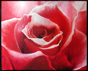 Red Rose by Auwris