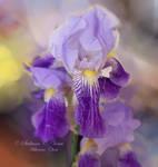 Purple Dream by HikarinoChou