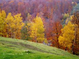 Autumn joy by HikarinoChou