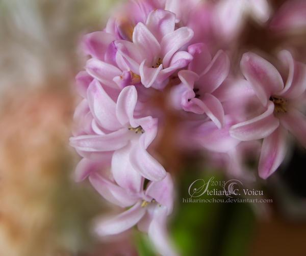 Hyacinth2 by HikarinoChou