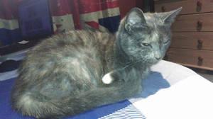 My cat (2)