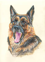 yawning dog by 50dd