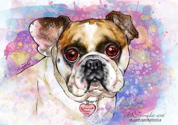 French Bulldog by 50dd