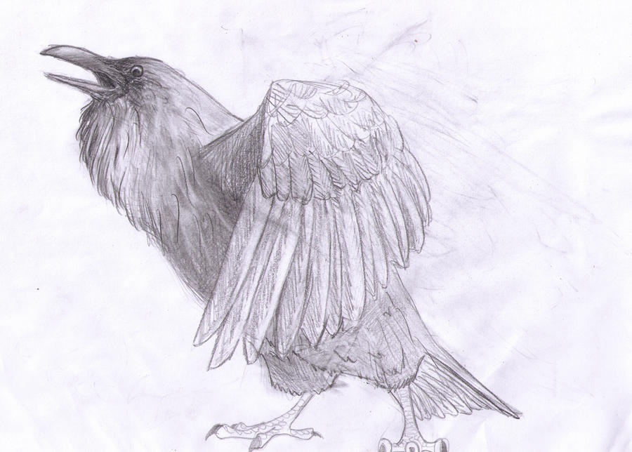 http://img00.deviantart.net/1296/i/2014/035/3/e/raven_by_vindesti-d753xkc.jpg