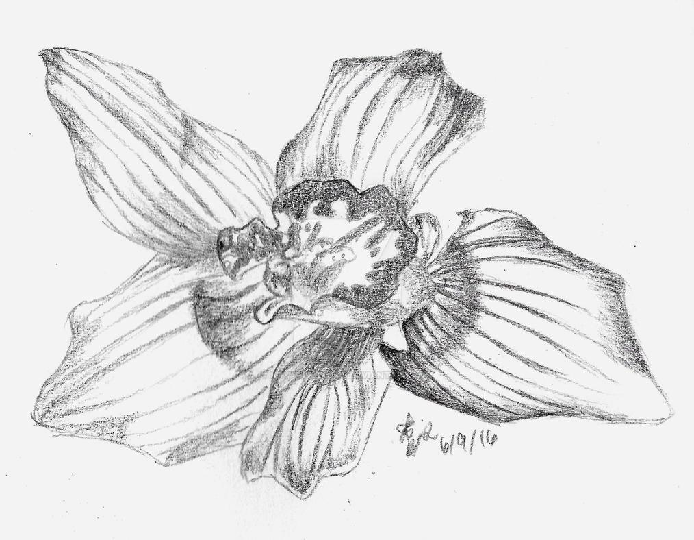 Orchid Sketch by KryativeLotus on DeviantArt  Orchid Sketch b...
