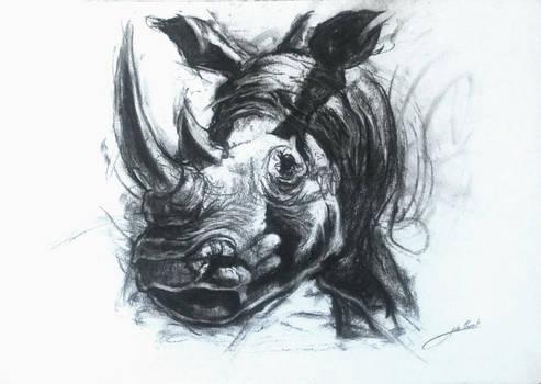 Rhinoceros au soleil