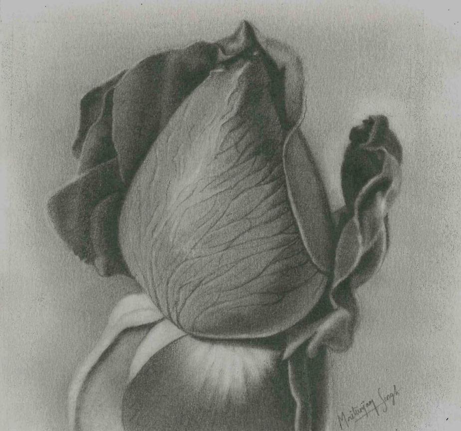 Rose by mritunjay-singh