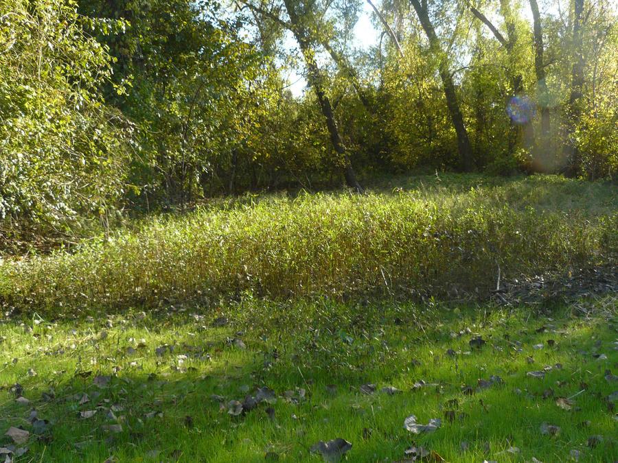 Grassy Knoll by MadameM-stock