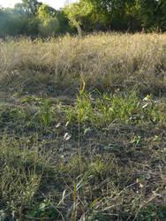 Field 05