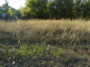 Field 06