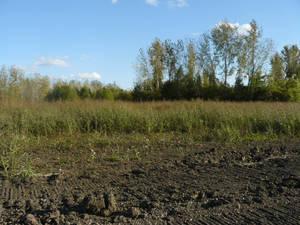 Field 08