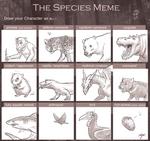 Species Meme-TF