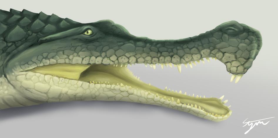 A monster Crocodile- up close