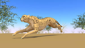 Cheetah in Low Poly