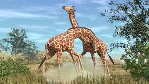 a Giraffe fight in Low Poly