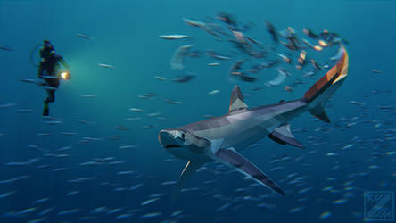Bigeye Thresher Shark in Low Poly