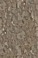 Seamless tree bark texture by hhh316