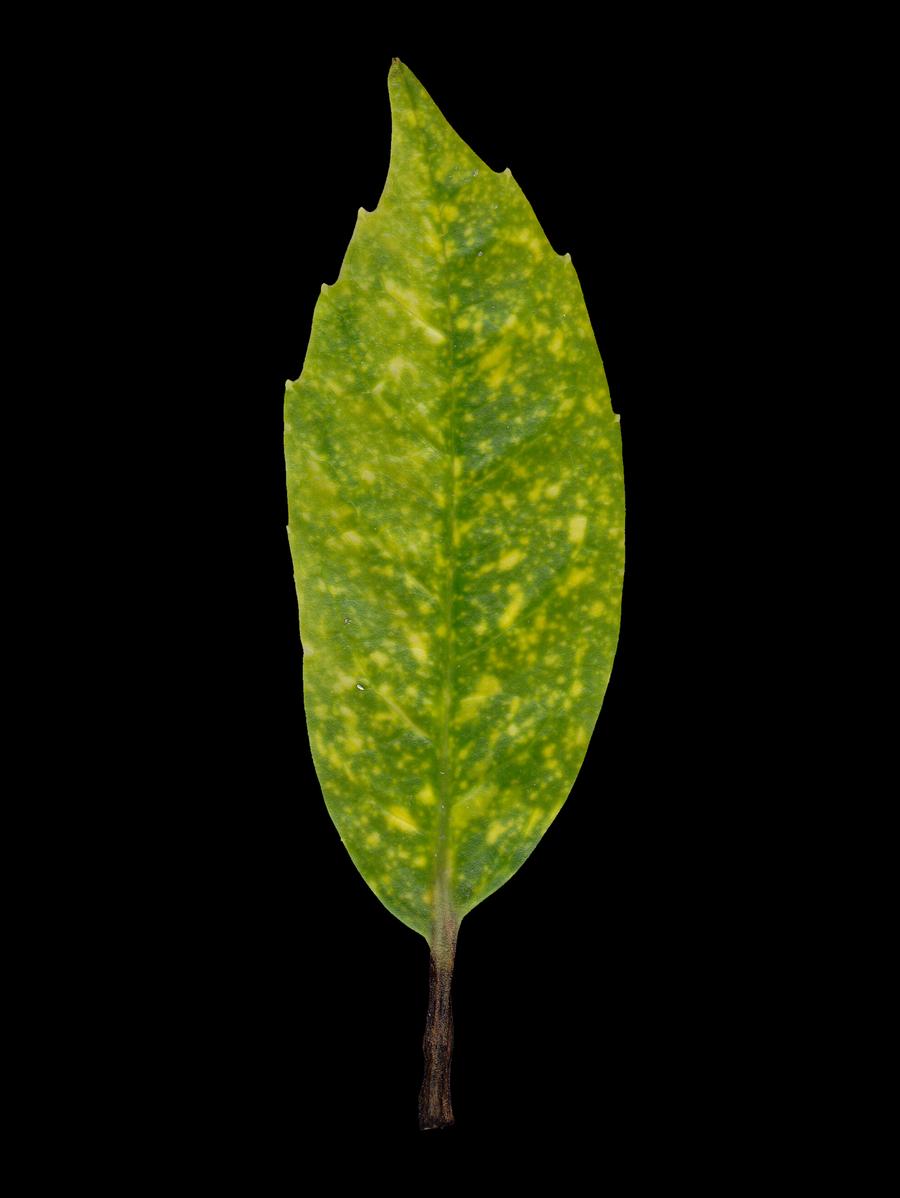Texture Plants