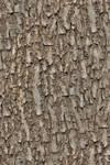 Seamless tree bark OMG