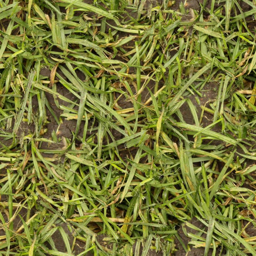 Seamless wet grass texture by hhh316 on DeviantArt