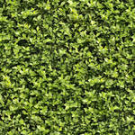 Seamless Hedge Texture
