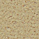 Seamless bread texture