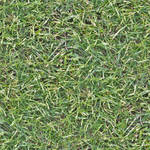 Seamless high res grass texture