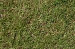 Grass turf lawn green ground field texture