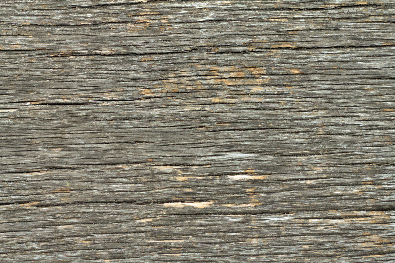 Where To Buy Natural Bark To Paint