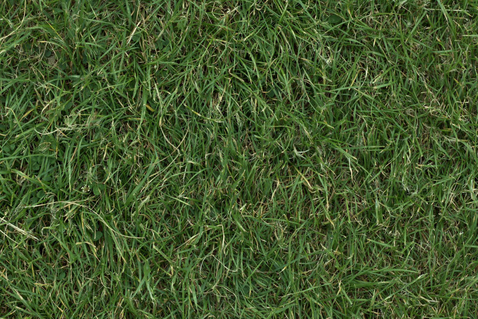 (GRASS 3) turf lawn green ground field texture by hhh316
