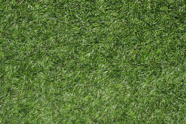 Grass Green Plastic Texture 3888 X 2592