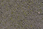 Asphalt Moss Texture 3888 X 2592