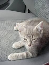 Kitten Leon