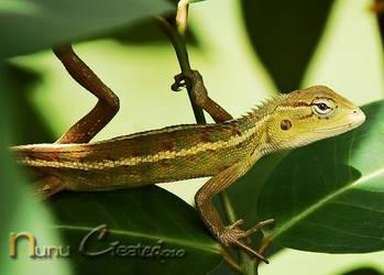 chameleon by uut