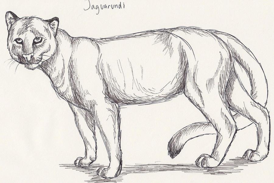 Jaguarundi By Vulpeserin On Deviantart
